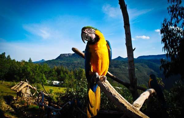 aves gramado zoo