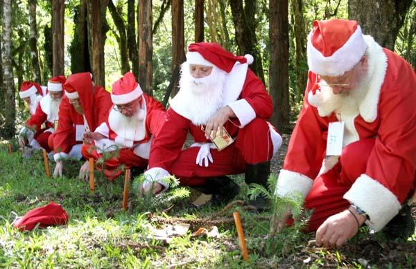 o jardim da aldeia do papai noel é iluminado por elfos